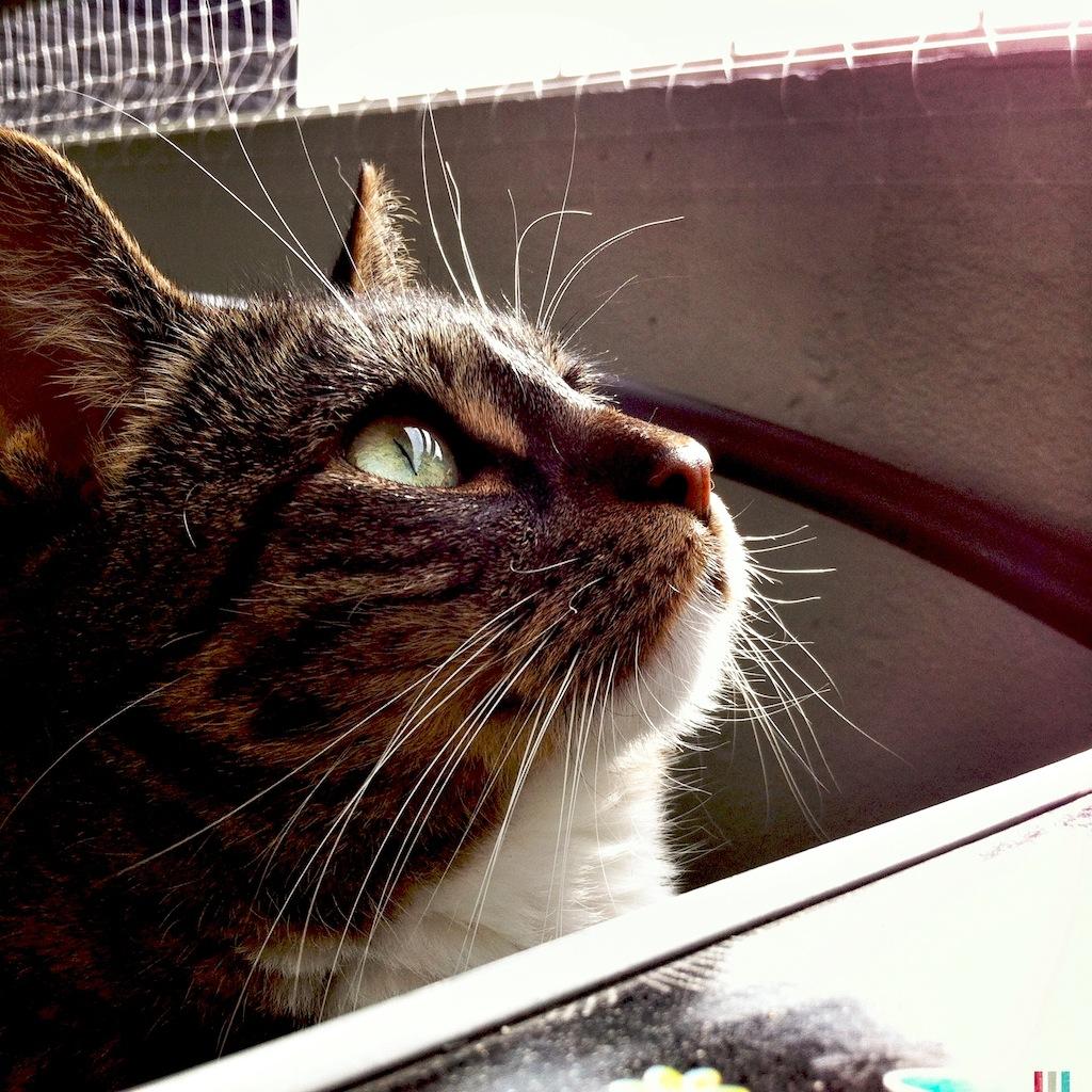 Contact Beyond Cat Food